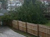 Neighbor's tree