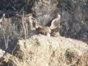 Deer aren't very good at hide n seek
