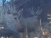 Two buck buddies hanging out