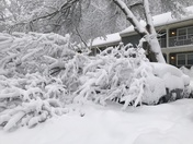 Heavy wet snow and fallen branches on top of cars.