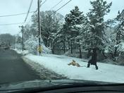 Dog enjoying the snow!