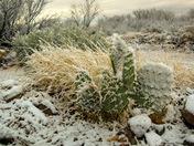 Southern Arizona Blizzard