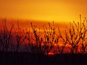 smokey sunset, 3-8-2018