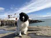 A Newfie at Nubble!