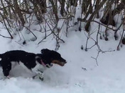 chloe playing in the snow in chazy