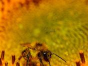 Macro Pollination.