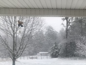 Snow in Wilkes County this morning from Elizabeth Cleary in Hays NC