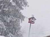 Birdhouse in storm