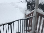 Cavalier not enjoying the snow
