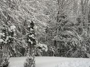 Snowy trees 🌲❄️⛄️❄️☃️
