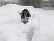 Penny in Lunenburg playing in all the snow!!