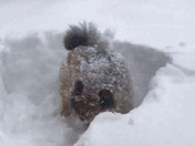 Dunkin from Wilmington's favorite winter activity; playing in the snow!
