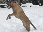 Bronco playing in the Nor'easter snow!