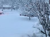 Beauty in snow