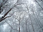 Snow March 13th
