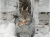My little Friend Mr squirrel