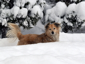 Max and Ella - some dogs like the snow