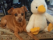 Rammie and his Ducky