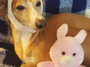 Bella and her Bunny