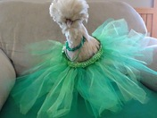 Happy St. Patrick's Day from Chickaletta Chicken