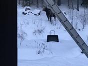 Moose family field trip sanbornton nh