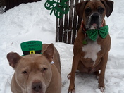 Happy St Party's Day