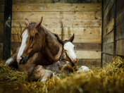 For some spring showers brings flowers, and for others it means FOALS!