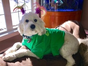 Max is ready for St. patty's day!!!
