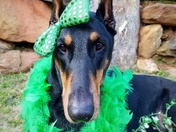 Happy St. Patrick's Day from this German girl living in an Irish world! (Sadie)