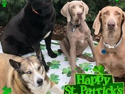Happy Saint Patrick's Day from the Spiva's in Edmond