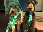 Lizzie and Francis Marion, Airedale