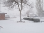 Snowing in Gallup this Morning