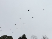 Helicopter formation over State Capitol this afternoon.