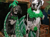 Eloise and Lainey wishing everyone a Great St. Patrick's Day!!!