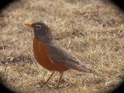 MR ROBIN READY TO WELCOME SPRING!