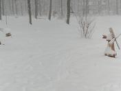 Snow Snow Snow!!!!