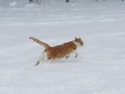 Pets enjoying the snow