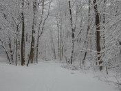 Snow around Lake Elkhorn