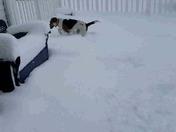 Doggie Snow Day!
