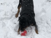 Samson enjoying the snow