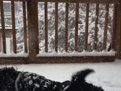 7 month old Bentley enjoying the snow