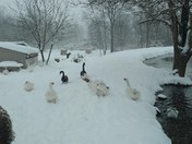 "The snow is ""emu knee deep"" here in Aspers, PA"