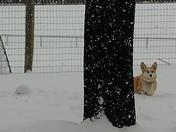Spring ??? Snow!!!!