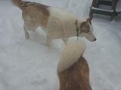 Husky weather!