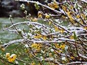 Snow 3/21/18 A wonderland