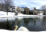 Joey the swan
