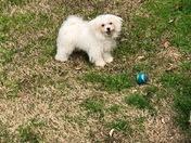 Happy Puppy Day