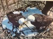 New partner in nest at Codorus Park