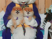 Mia and Pippa visit the Easter Bunny at Capitola Mall