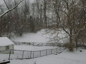 My backyard in Florence, Ky